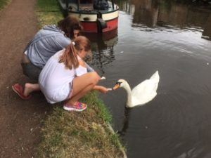 Swans on the Stratford and Avon Canal