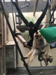 Monkey World Rescue in Devon